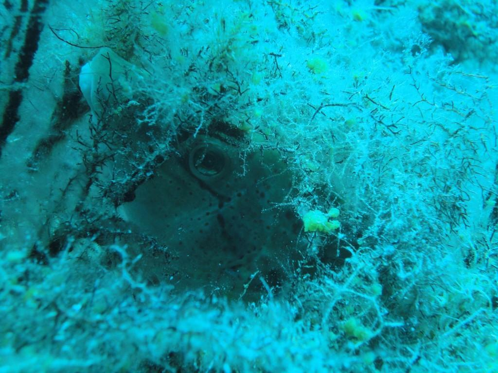 Avlaki diving spot 03