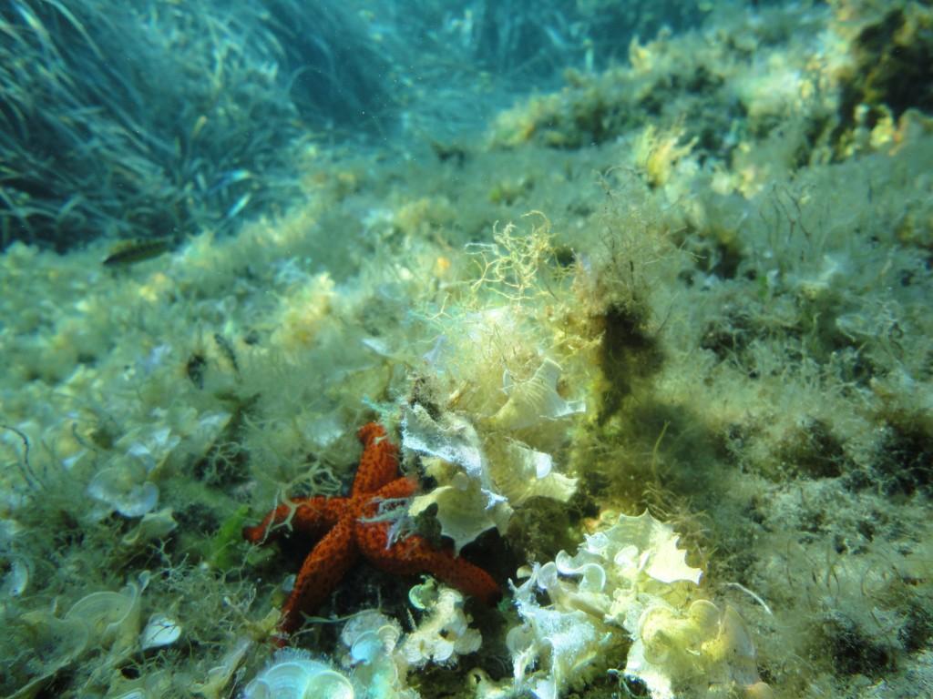 Balos diving spot 15