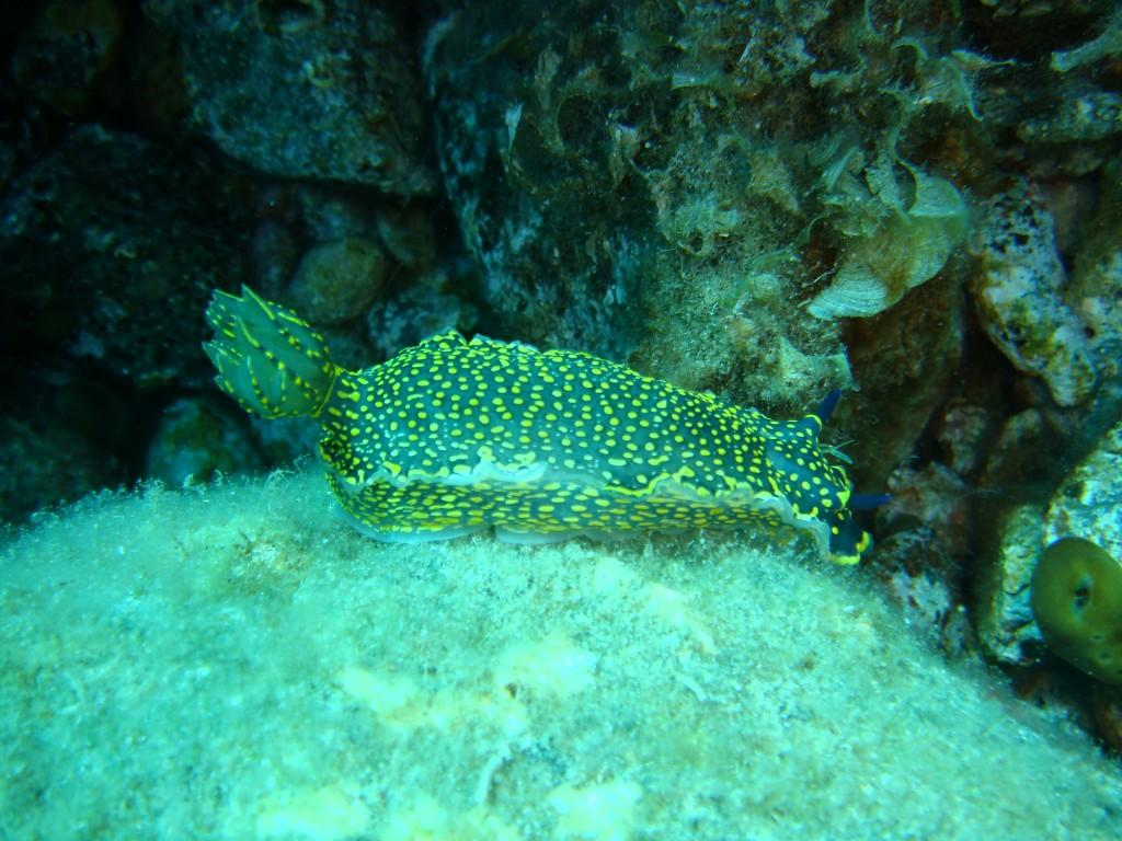 Avlaki diving spot 08