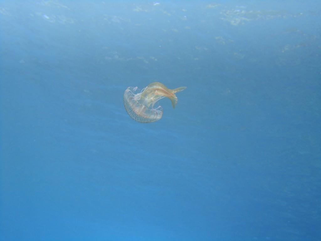 Kaki Lagada reef 03