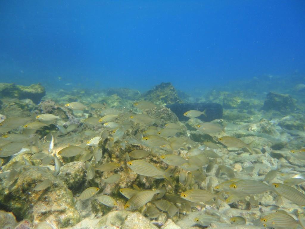 Kaki Lagada reef 17