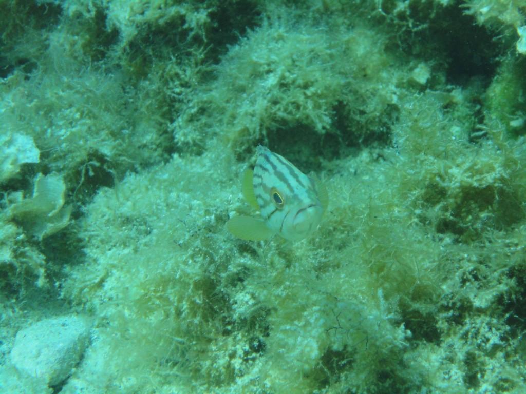Balos diving spot 06