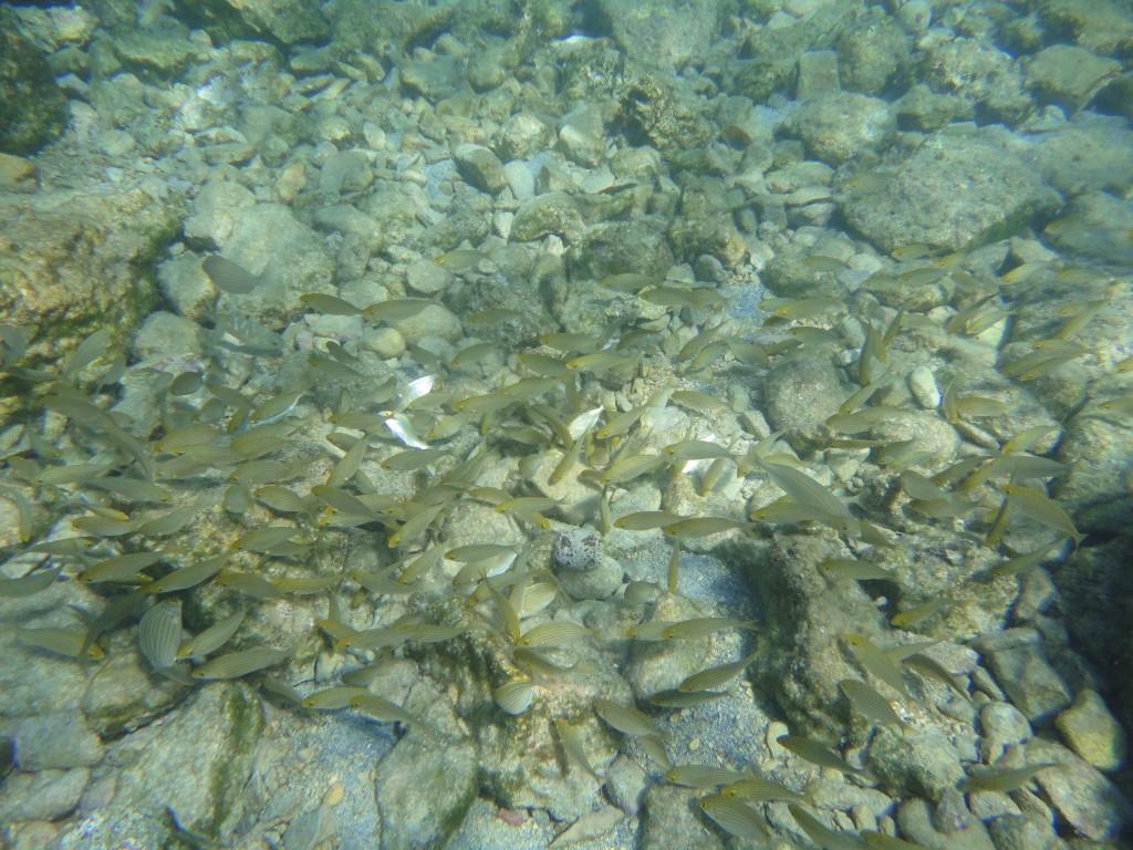 Kaki Lagada reef 18