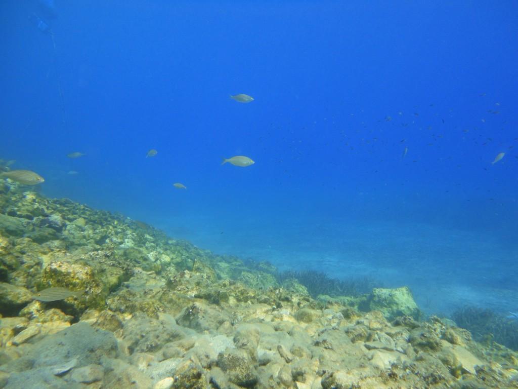 Kaki Lagada reef 16