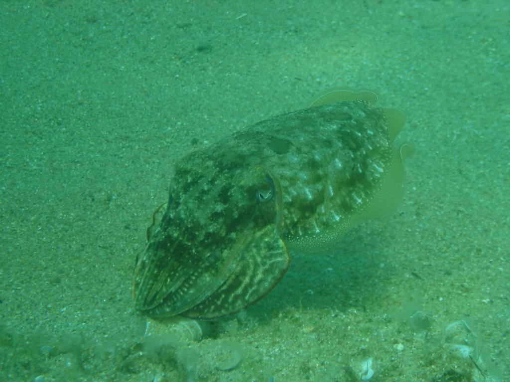 Balos diving spot 04