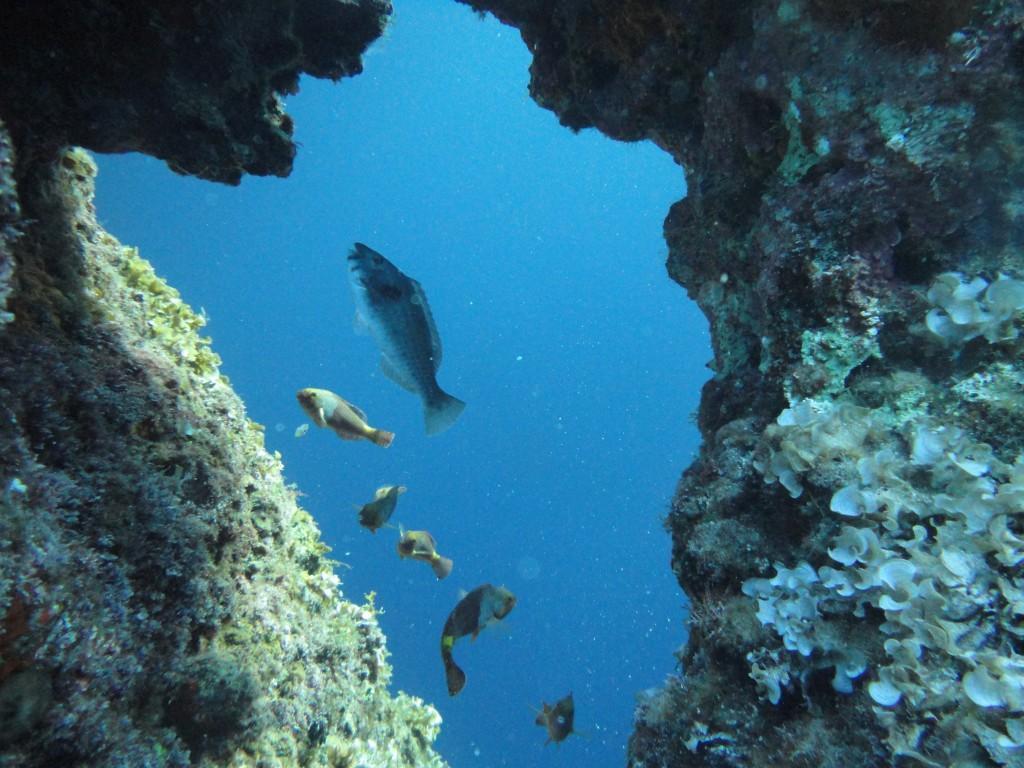 Mongonissi diving spot 03