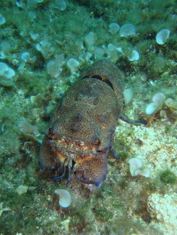 sub marine rock (3)