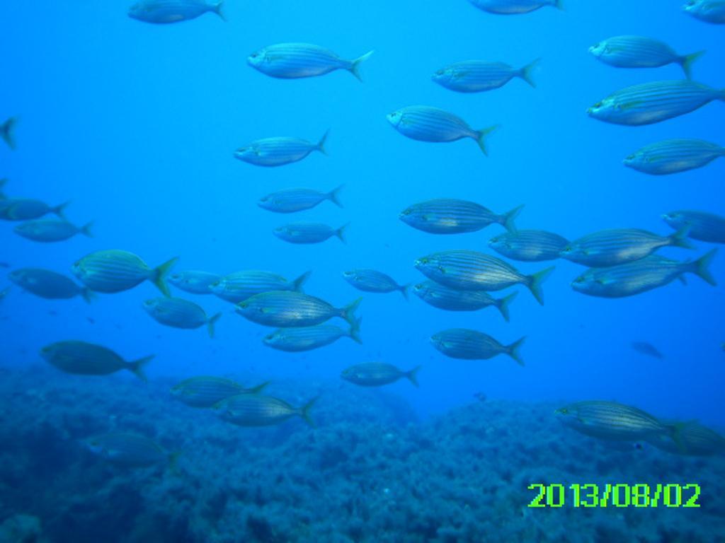 aqua reef 4