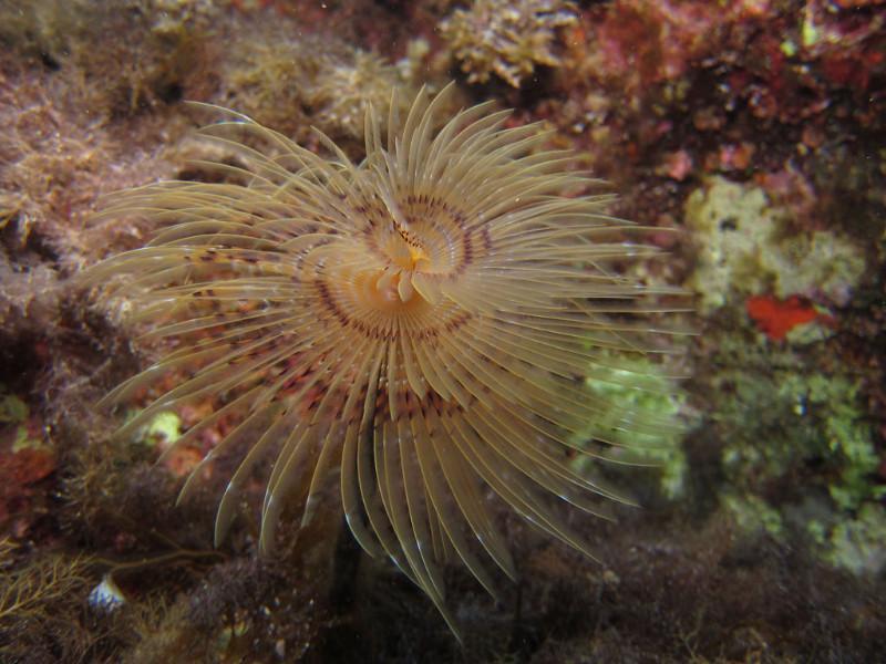 anemones-1