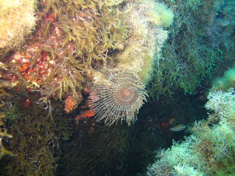 anemones-5