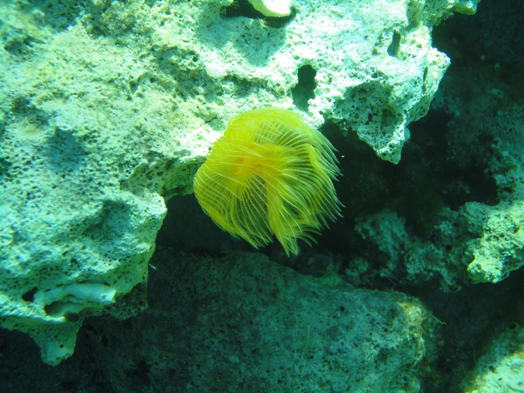 Avlaki diving spot 04