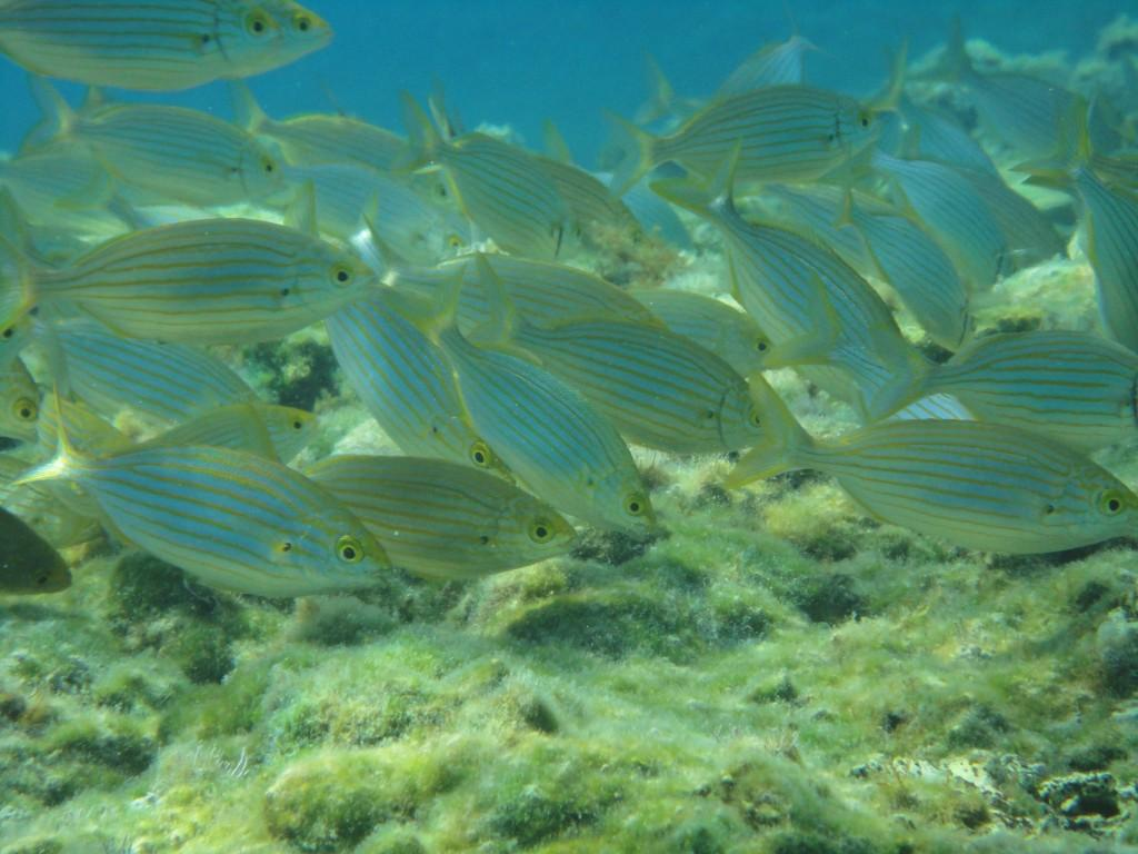 Kaki Lagada reef 11