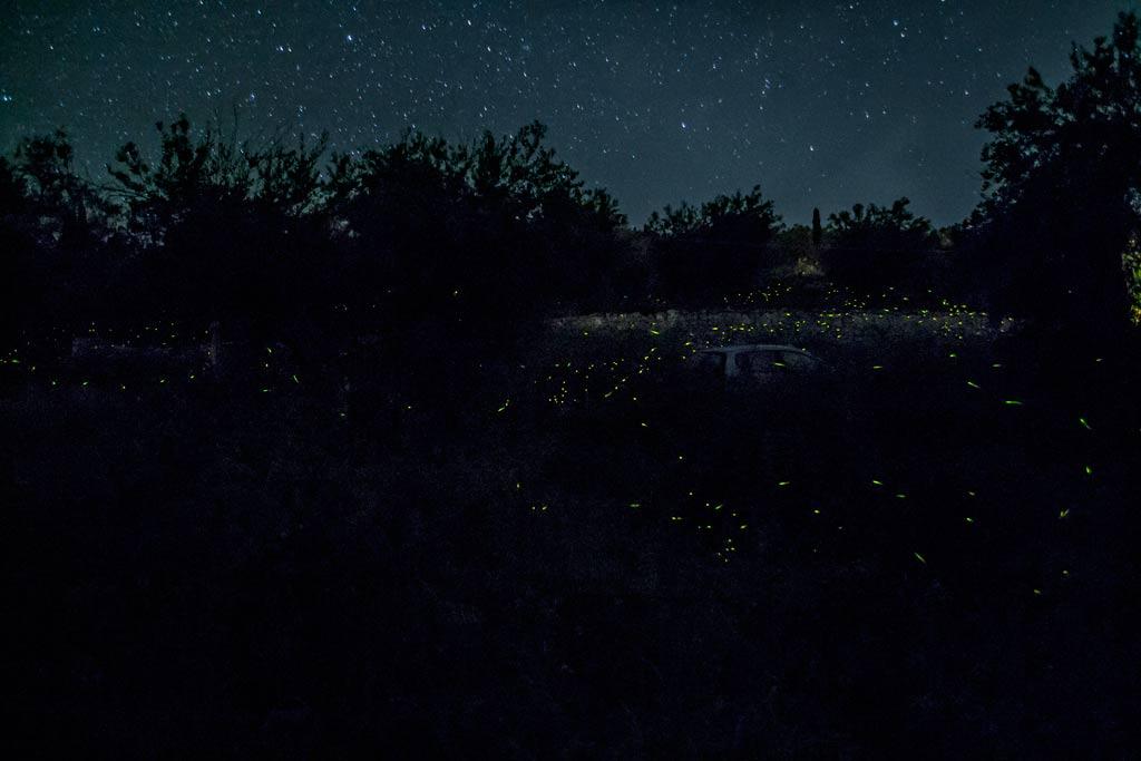 fireflies (1)