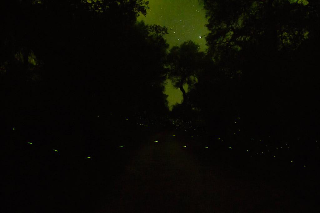 fireflies (2)