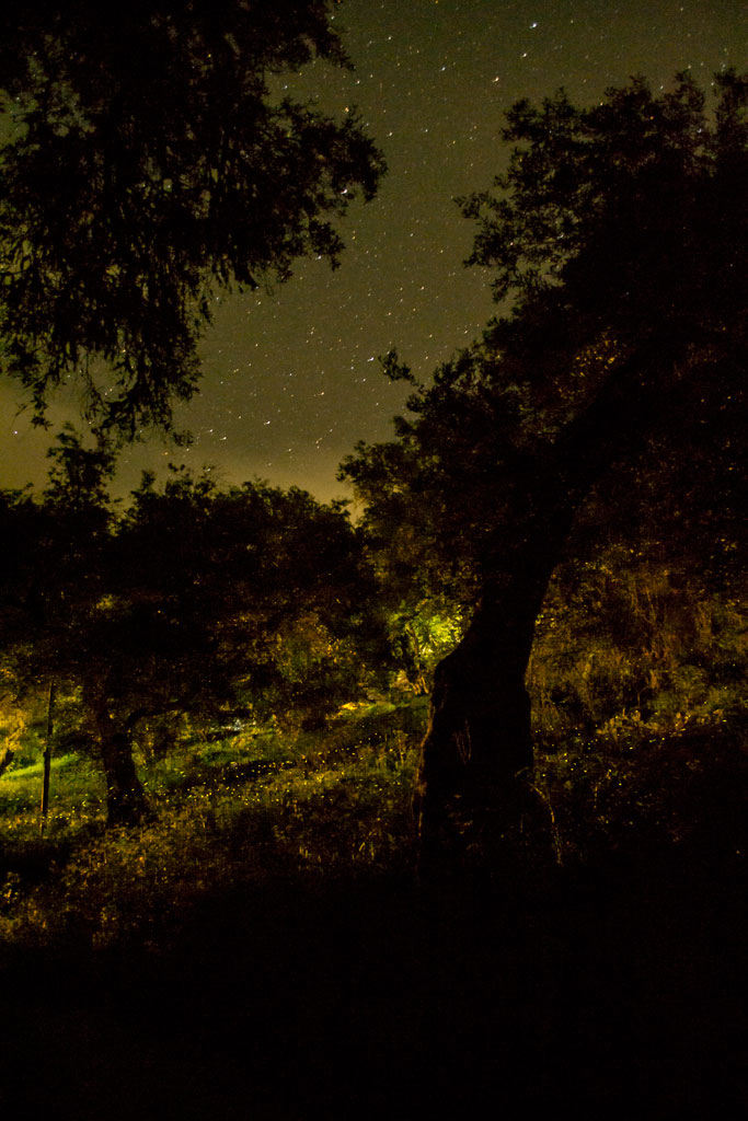 fireflies (4)