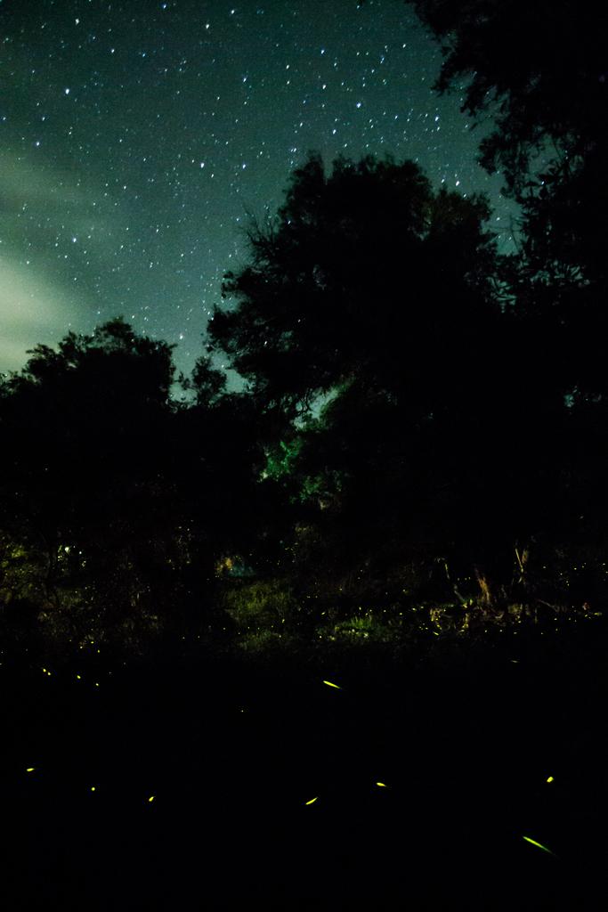 fireflies (5)