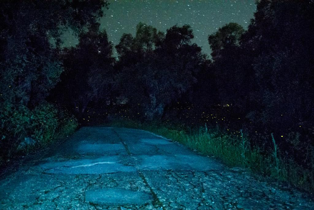 fireflies (6)