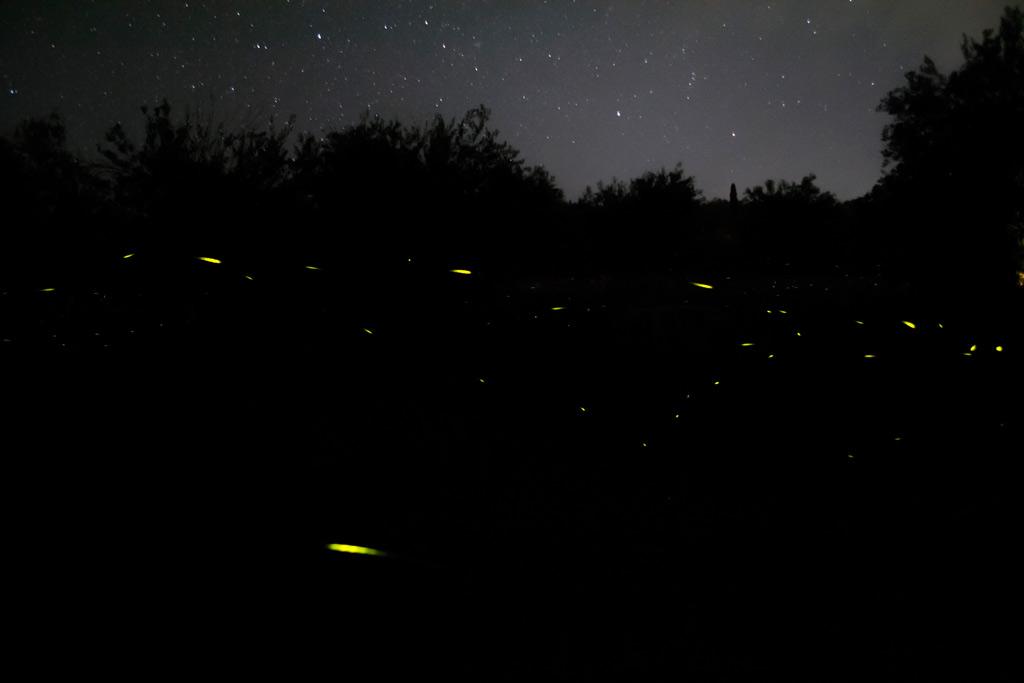 fireflies (7)
