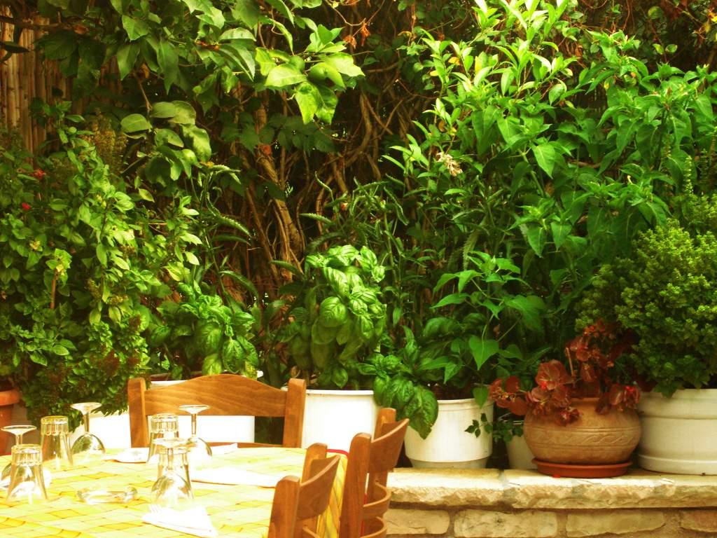 Stasinos Garden Restaurant 02